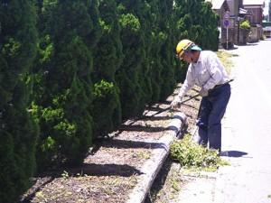 除草した草の回収作業